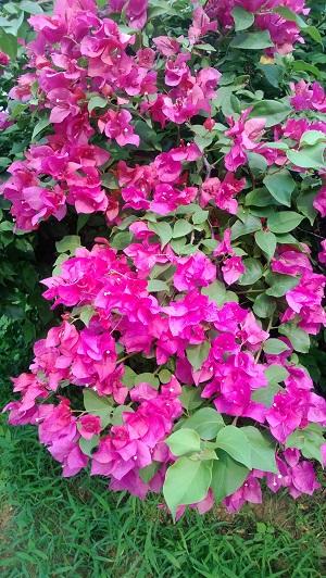 flowers in jnu