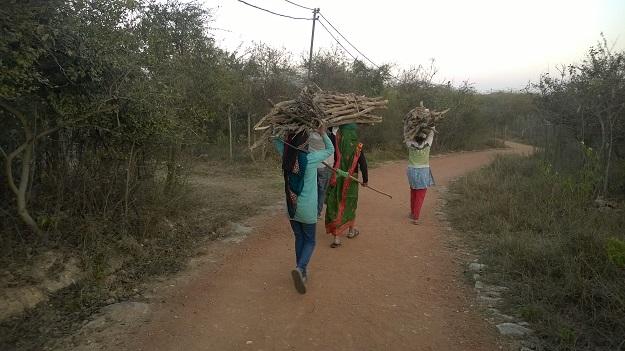 aravali biodiversity park in delhi