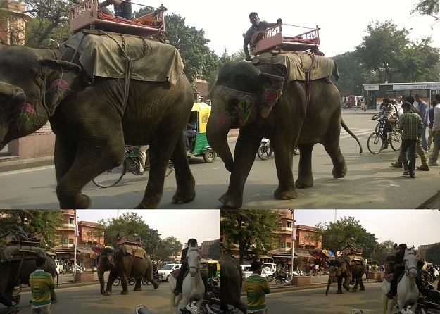 elephants on jaipur roads
