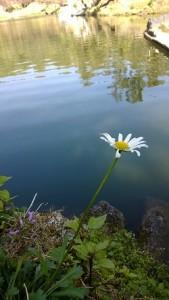 bhulla tal lake in lansdowne