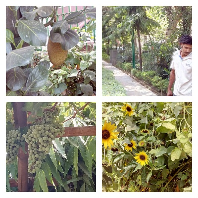grapes in delhi