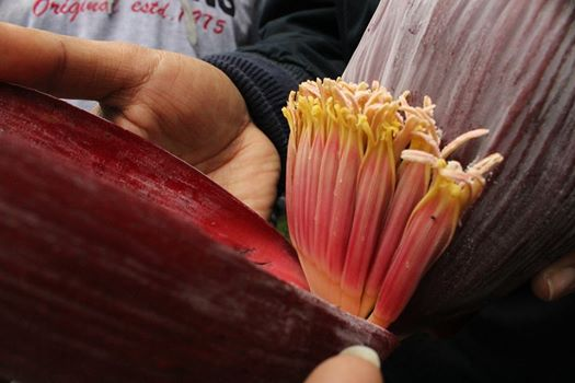 banana flowers guwahati