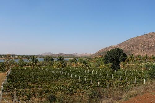 bangalore wine tour soma